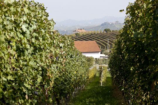 Vy från en vingård omedelbart norr om Barolo, som ligger längre ner i dalen.